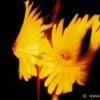 menu aktfotografie portfolio farbe projektionen